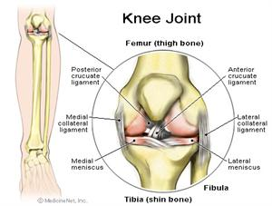 Picture of the anatomy of the knee joint. Doctors at PMA will give a synvisc injection for anyone experience excruciating knee pain.